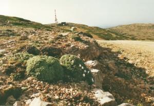Foto 1. Erodium celtiberium, op de hoogvlakte van de S.ra de Javalambre. @ D. van Assum, 2002