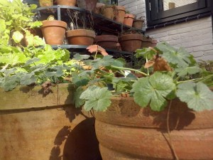 terracotta-potten1-300x225